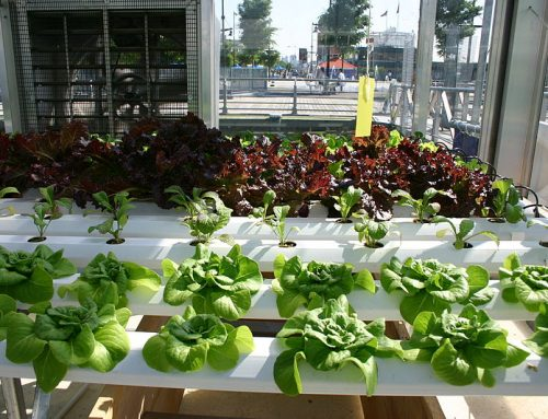 3 Basic Tips to a Successful Hydroponic Grow System