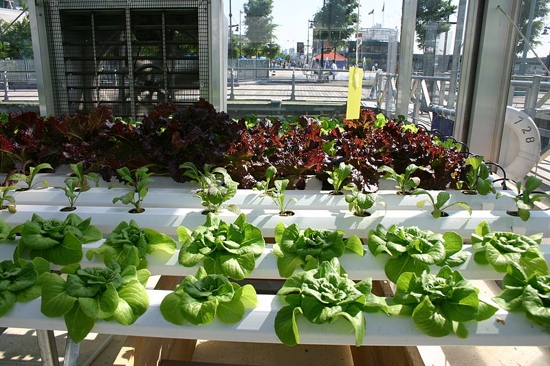Growing Using Hydroponics