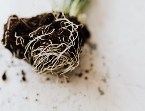 Is It Possible to Use Regular Soil Fertilisers for Hydroponics?